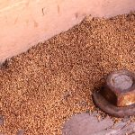 termite-signs-droppings