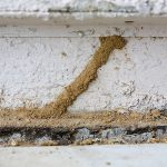 termite-signs-mud-tunnels